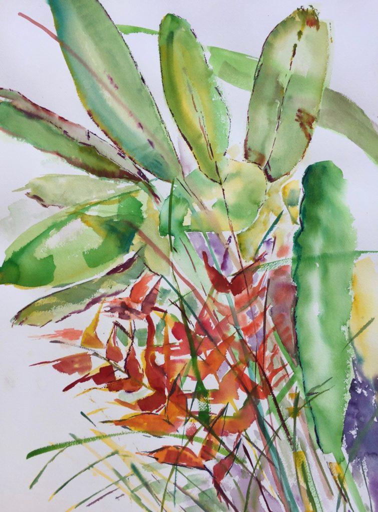 Tropical Rainforest Antigua