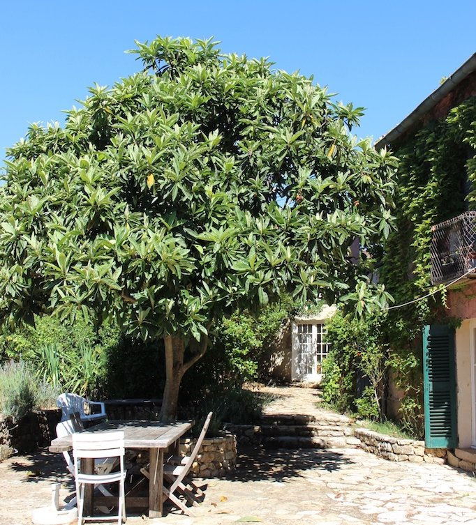 Provençal Farmhouse terrace perfect for dining under medlar tree.